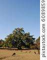 นารา,สวน,สวนสาธารณะ 6089859
