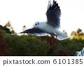 鳥兒 鳥 紅嘴鷗 6101385