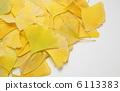 秋葉 黃葉 銀杏 6113383