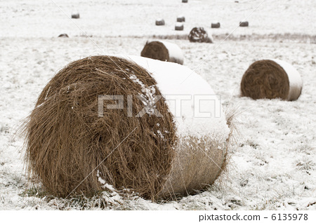 Snow covered hay roll on snowy field 6135978