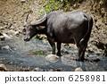 牲口 哺乳動物 動物 6258981