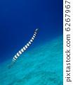 ชุดว่ายน้ำงู 6267967