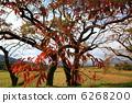 樹木 樹 樹棲 6268200