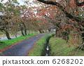 蝦虎魚 山漆 楓樹 6268202