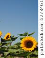 ทานตะวัน,โอซาก้า,สวน 6273461
