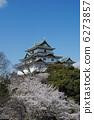 ดอกซากุระบาน,ซากุระบาน,ปราสาท 6273857