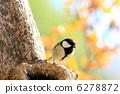 大山雀 山雀 鳥兒 6278872