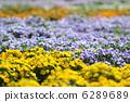 中提琴 花朵 花 6289689