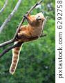 mammals, mammal, wildlife 6292758