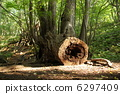 arboreal, stub, stump 6297409