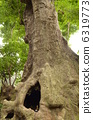 ancient akagi tree, large tree, tree 6319773