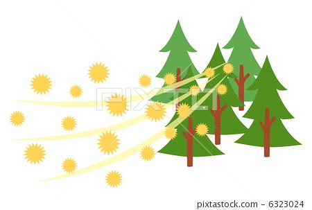 삼나무 꽃가루 6323024