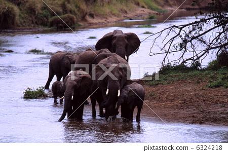 取暖在水中的非洲大象 6324218