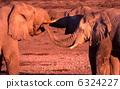 非洲大象 6324227
