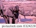 非洲大象飲用水 6324228