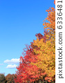 sweetgum, red, leafe 6336481