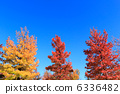 sweetgum, red, leafe 6336482