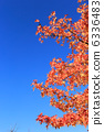 sweetgum, red, leafe 6336483