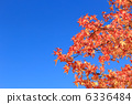 sweetgum, red, leafe 6336484