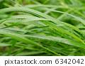 草和水滴 6342042
