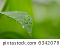 葉子和水滴 6342079