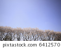 벚꽃길, 벚나무무, 플라워 6412570