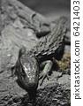 爬行動物 爬蟲類的 蠑螈 6421403