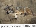 欧洲狼 6486108
