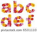 字母 花朵 花卉 6501110