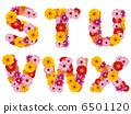 字母 花朵 花卉 6501120