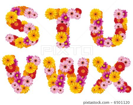 花卉首都,字母,鮮花,英文, 6501120