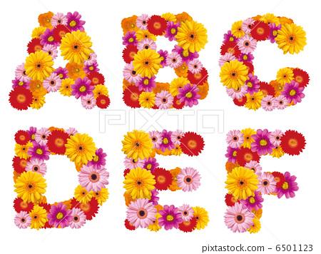 花卉首都,字母,鮮花,英文, 6501123
