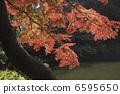 ใบไม้ร่วง 6595650