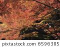 ใบไม้ร่วง 6596385