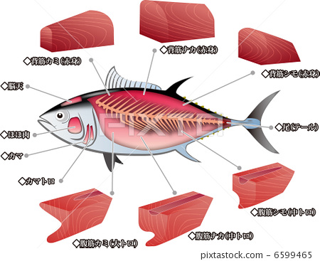 Disassembly    diagram    of tuna  part   Stock    Illustration