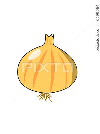 Onion illustration 6599964