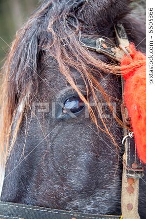 Horse head with eye 6605366