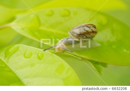 snails 6632208