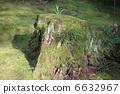 arboreal, stub, stump 6632967