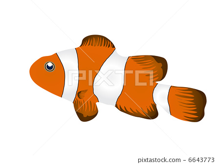 Vector illustration of clownfish isolated on white background     6643773