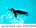 สวนสัตว์,เพนกวิน,นก 6669844