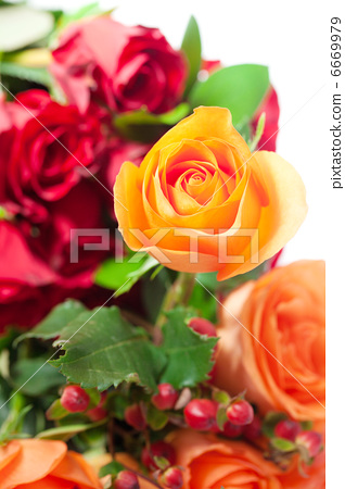 bouquet of colorful roses 6669979