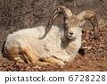 dole-ship, animal, animals 6728228