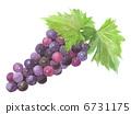 葡萄 水果 食品 6731175