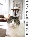 Cat Cafe 6749645
