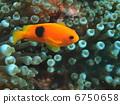 물고기, 열대어, 피쉬 6750658