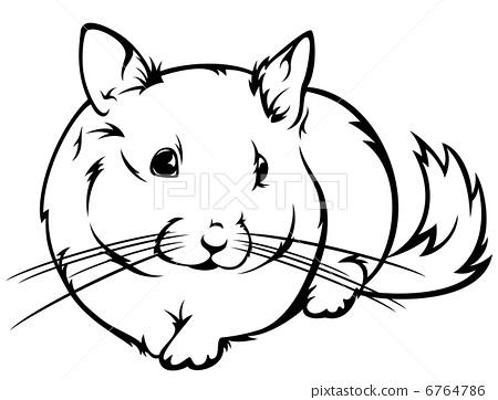 cute chinchilla vector outline - black and white realistic illustration 6764786