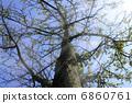 Tree 6860761