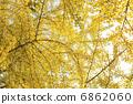 秋叶 黄叶 银杏 6862060