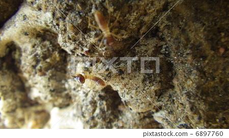 개미집 6897760